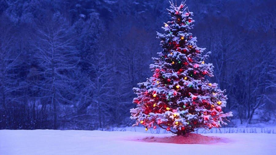 Christmas Tree, Merry Christmas 2009