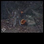 DeerPumpkin.png