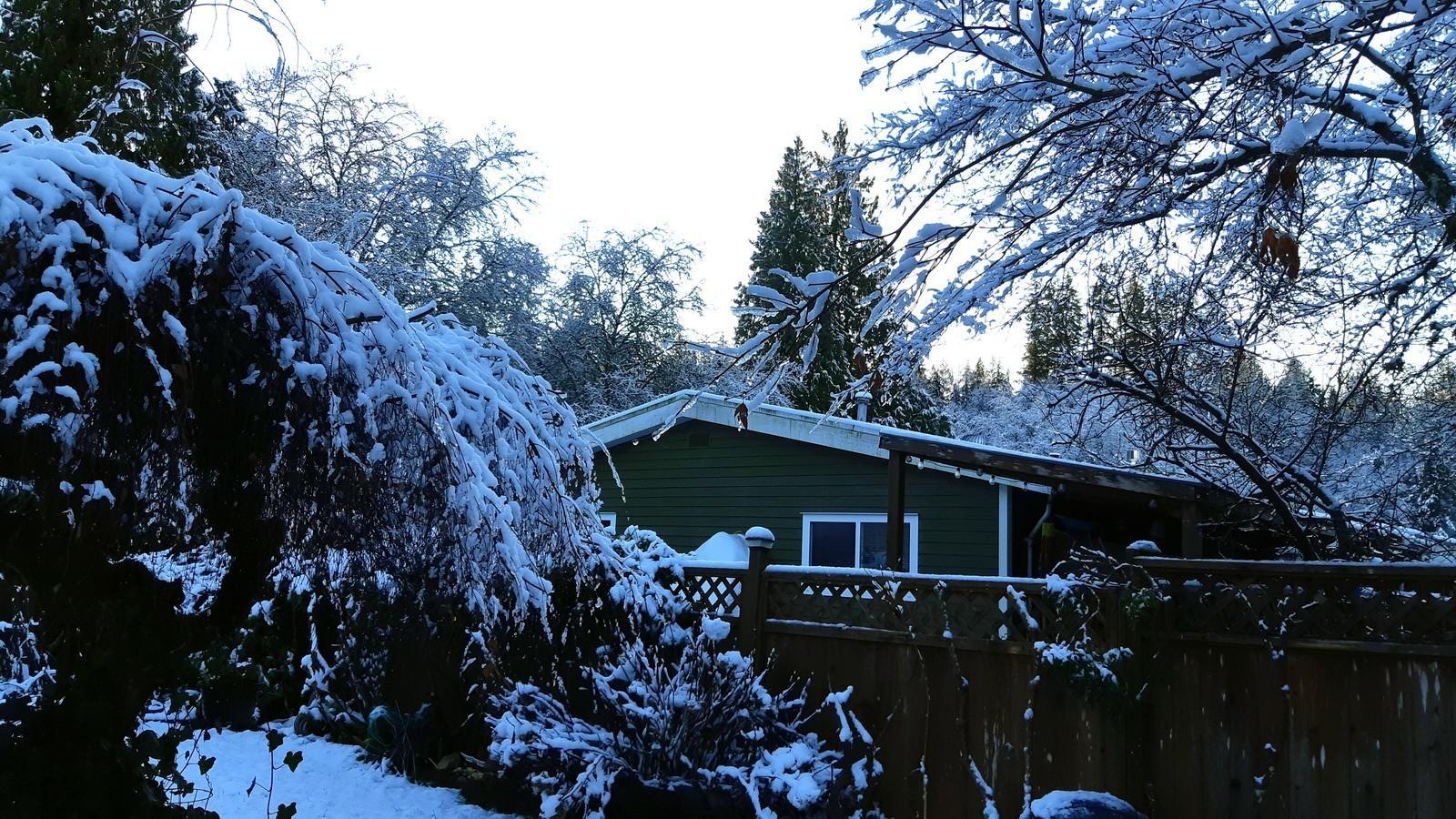 Winter wonderland Dec 22 2020 2.jpg